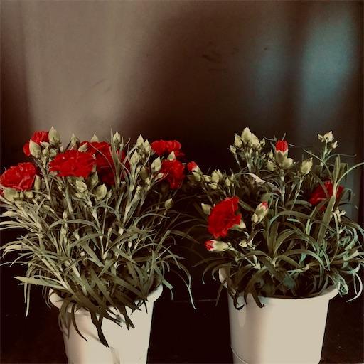 f:id:asunaro-flower:20200509080802j:image