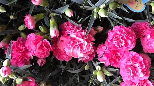 f:id:asunaro-flower:20200509080840j:image