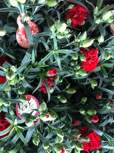 f:id:asunaro-flower:20200509080912j:image