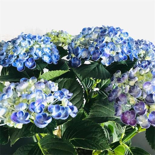 f:id:asunaro-flower:20200516170900j:image