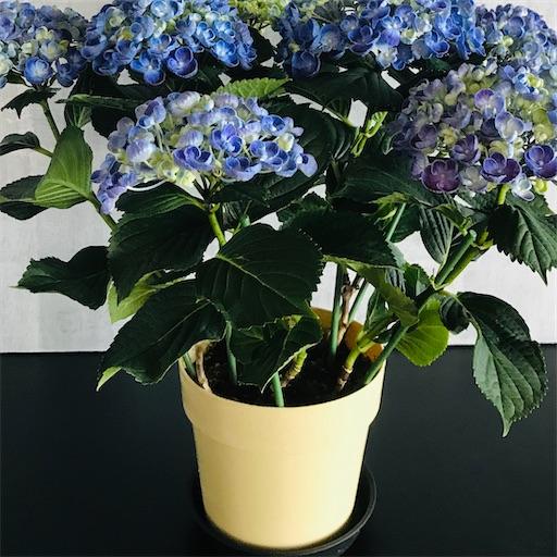 f:id:asunaro-flower:20200516171120j:image