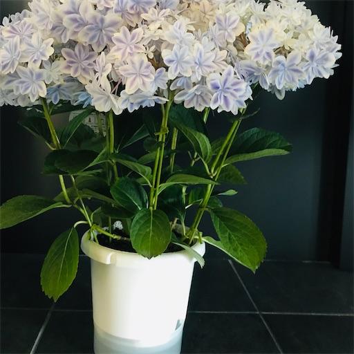 f:id:asunaro-flower:20200516171123j:image