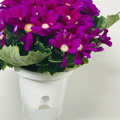 f:id:asunaro-flower:20200516172205j:image