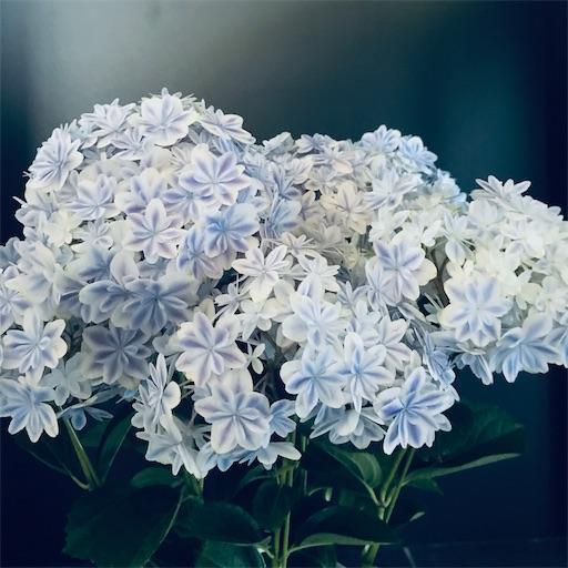 f:id:asunaro-flower:20200516183550j:image