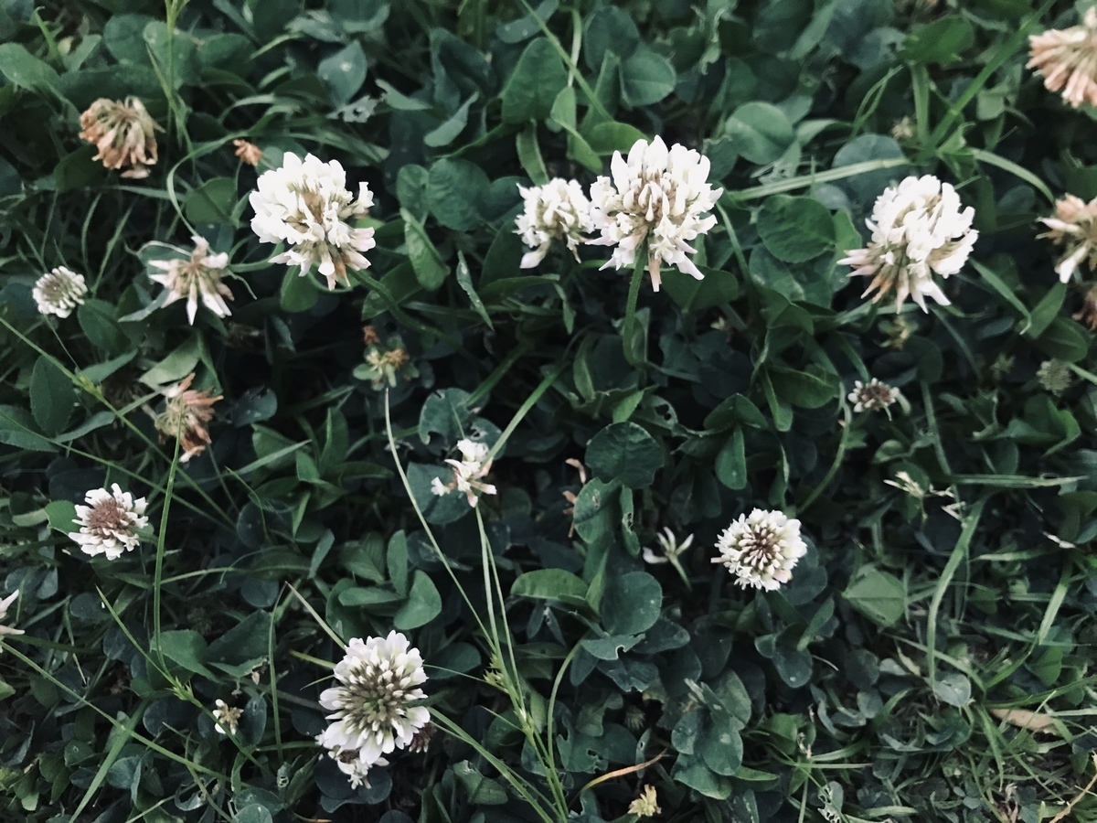 f:id:asunaro-flower:20200531172844j:plain