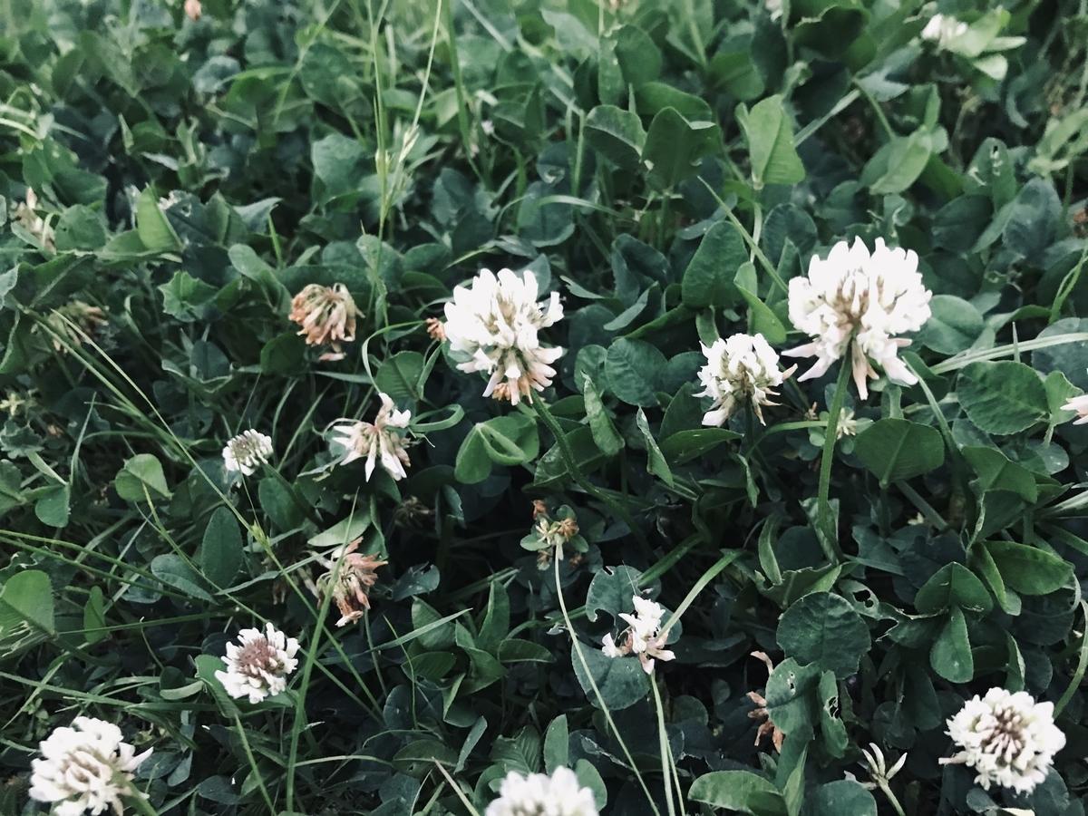 f:id:asunaro-flower:20200531172847j:plain