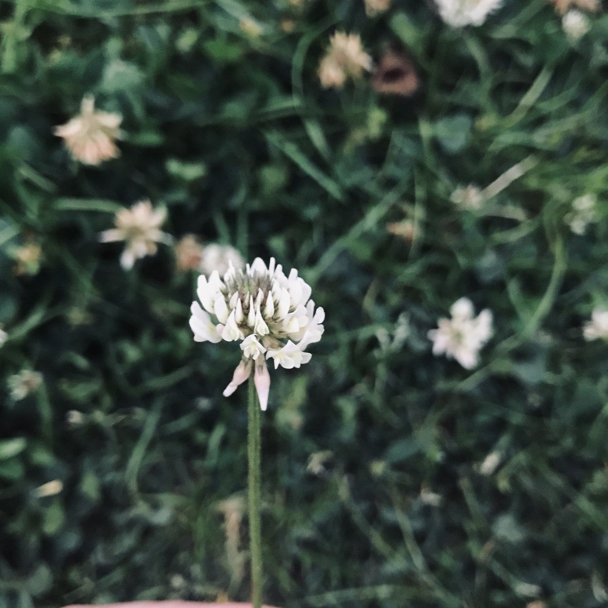 f:id:asunaro-flower:20200531172849j:plain