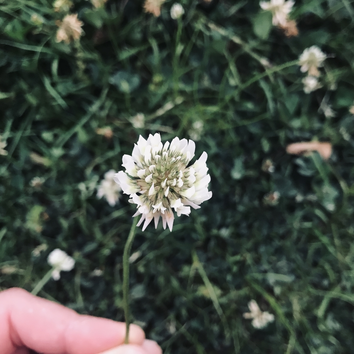 f:id:asunaro-flower:20200531172852j:plain