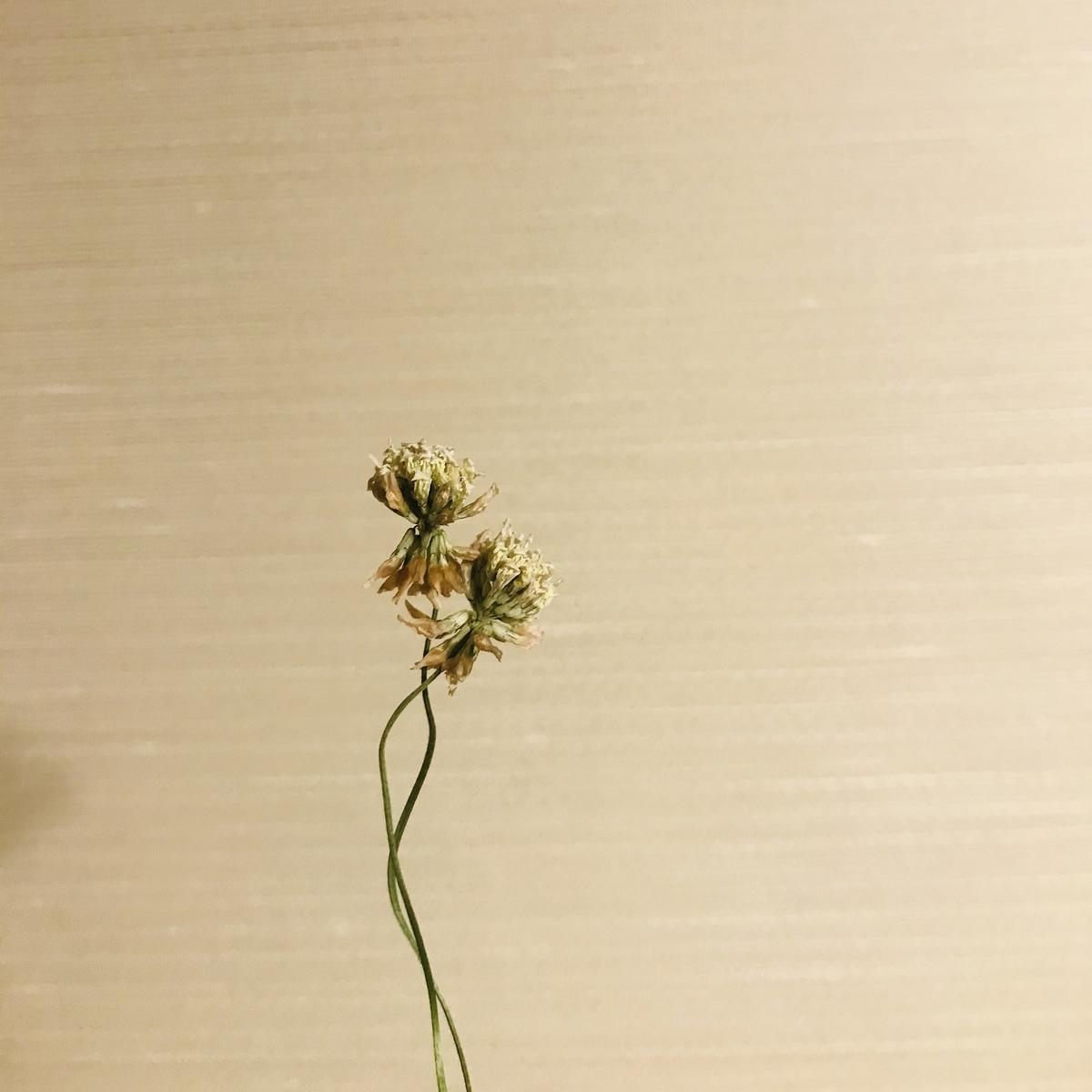f:id:asunaro-flower:20200531203406j:plain