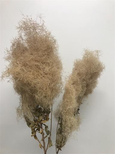f:id:asunaro-flower:20200605182711j:image