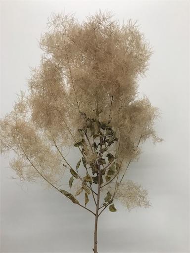 f:id:asunaro-flower:20200605182909j:image