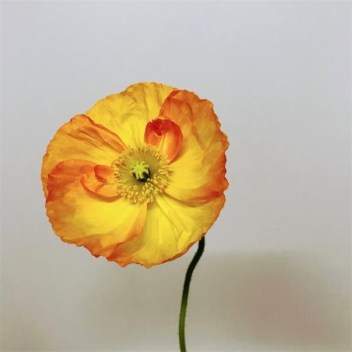 f:id:asunaro-flower:20200609234227j:image