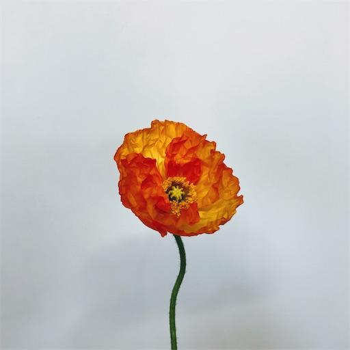 f:id:asunaro-flower:20200609234230j:image