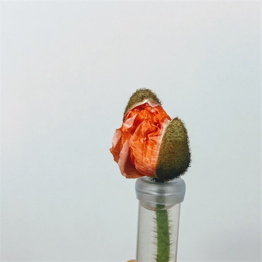 f:id:asunaro-flower:20200609234512j:image