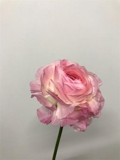 f:id:asunaro-flower:20200609235949j:image