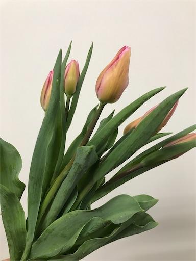 f:id:asunaro-flower:20200609235952j:image