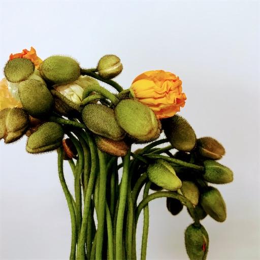 f:id:asunaro-flower:20200610000356j:image
