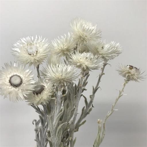 f:id:asunaro-flower:20200610223620j:image