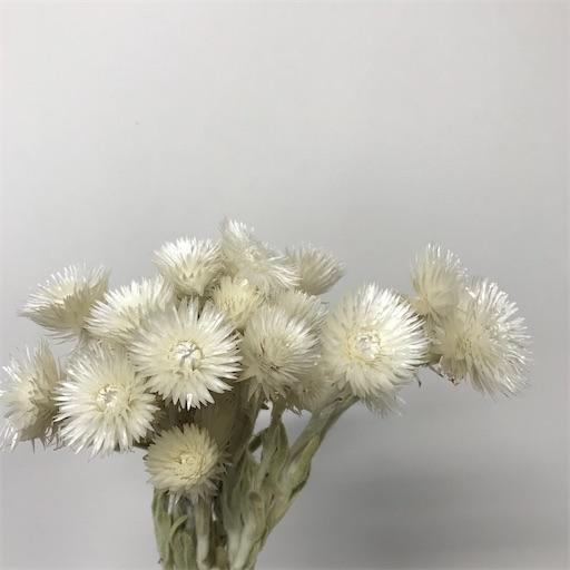 f:id:asunaro-flower:20200611010449j:image