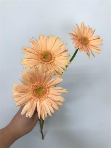 f:id:asunaro-flower:20200613005249j:image