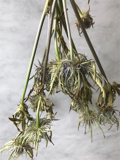 f:id:asunaro-flower:20200613005758j:image