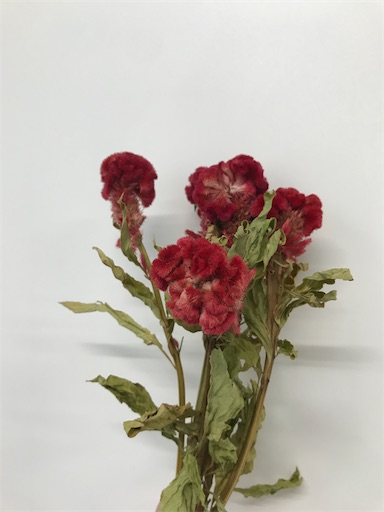 f:id:asunaro-flower:20200613011559j:image