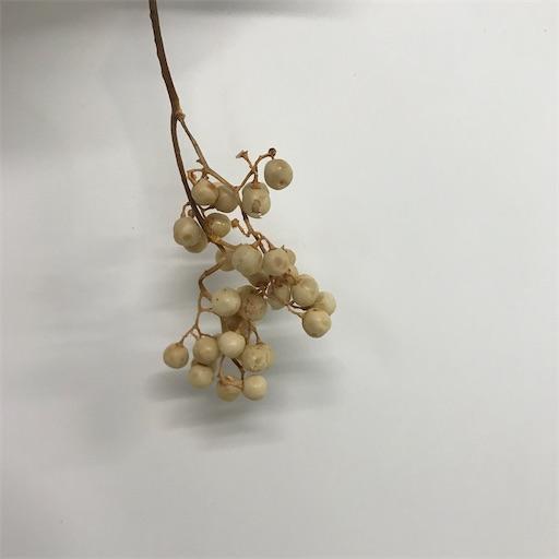 f:id:asunaro-flower:20200613142312j:image