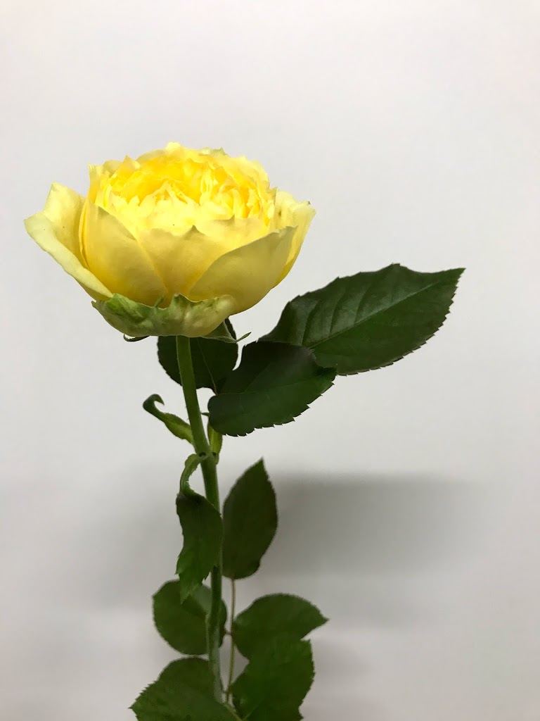 f:id:asunaro-flower:20200613231437j:plain