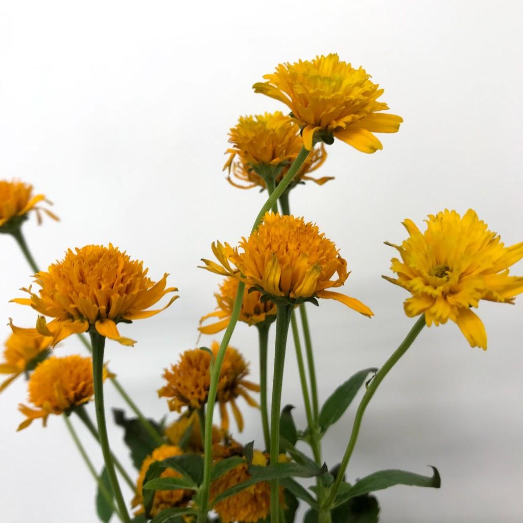 f:id:asunaro-flower:20200614021142j:plain