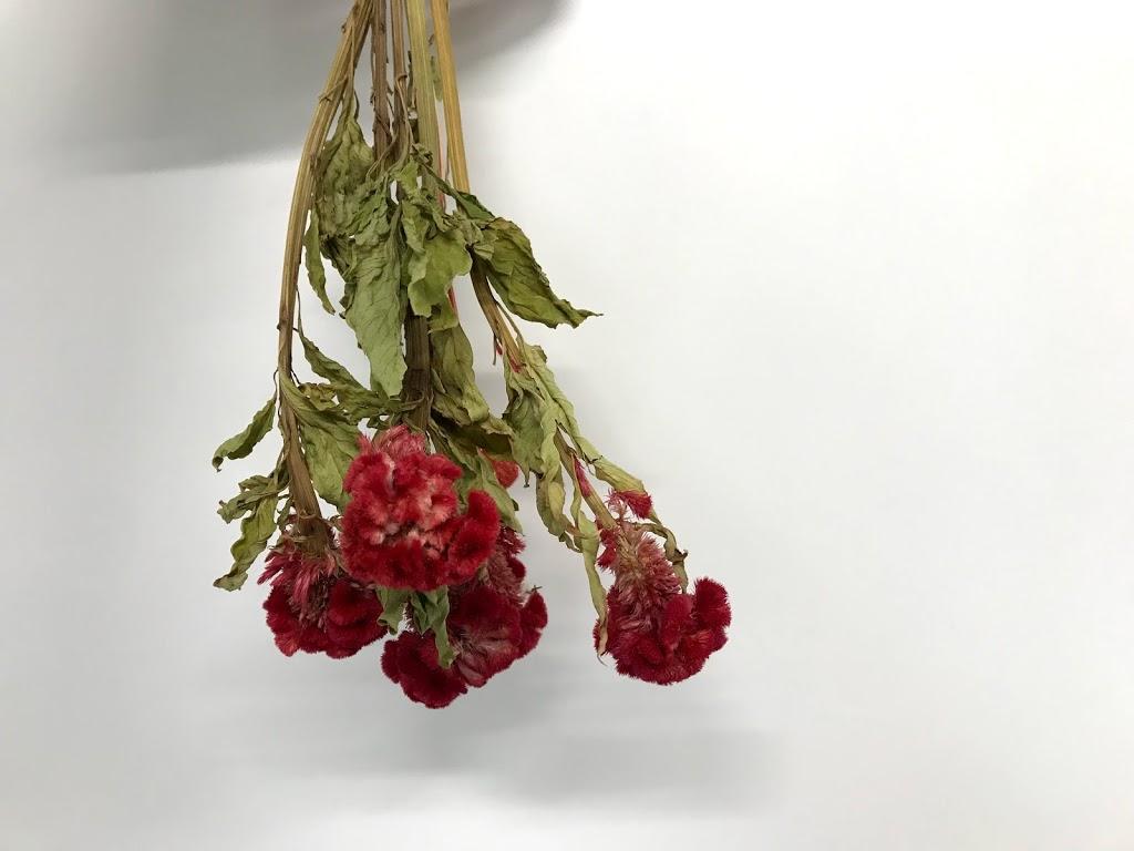 f:id:asunaro-flower:20200614023636j:plain