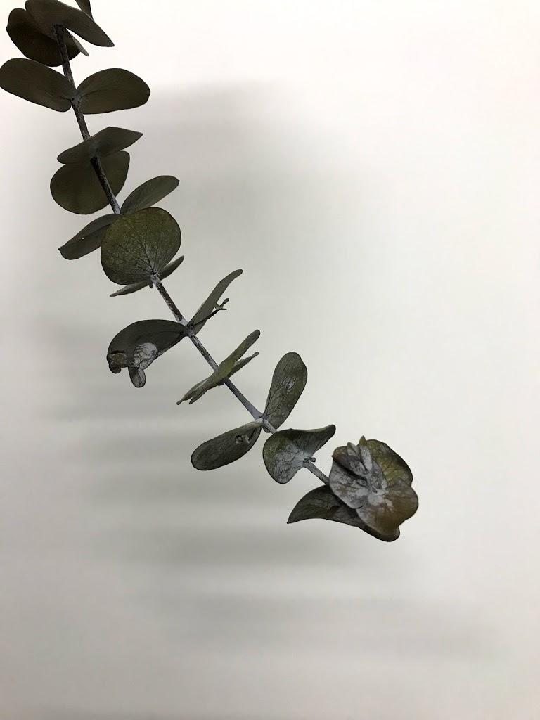 f:id:asunaro-flower:20200614024034j:plain