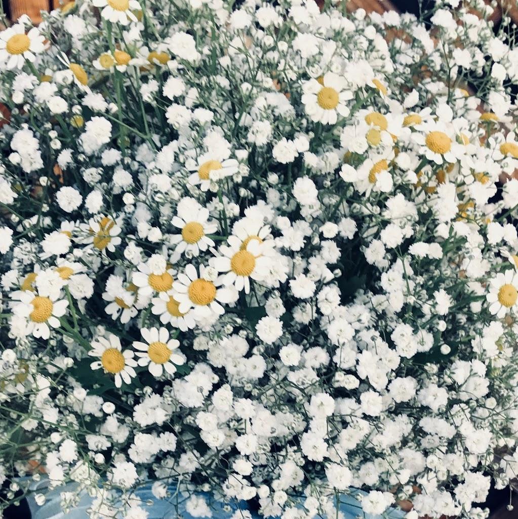 f:id:asunaro-flower:20200614031300j:plain