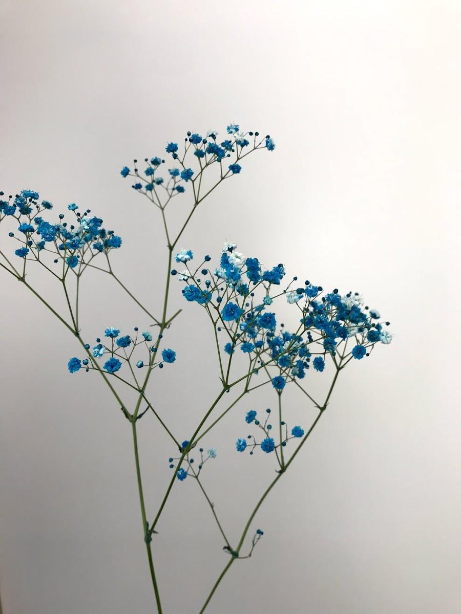 f:id:asunaro-flower:20200614031352j:plain