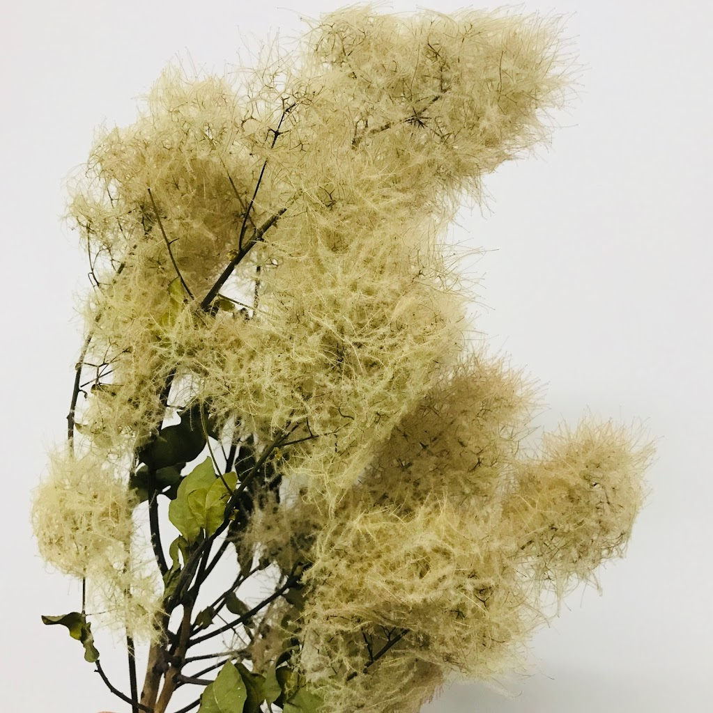 f:id:asunaro-flower:20200614031814j:plain