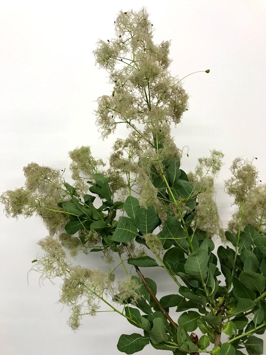 f:id:asunaro-flower:20200614031905j:plain