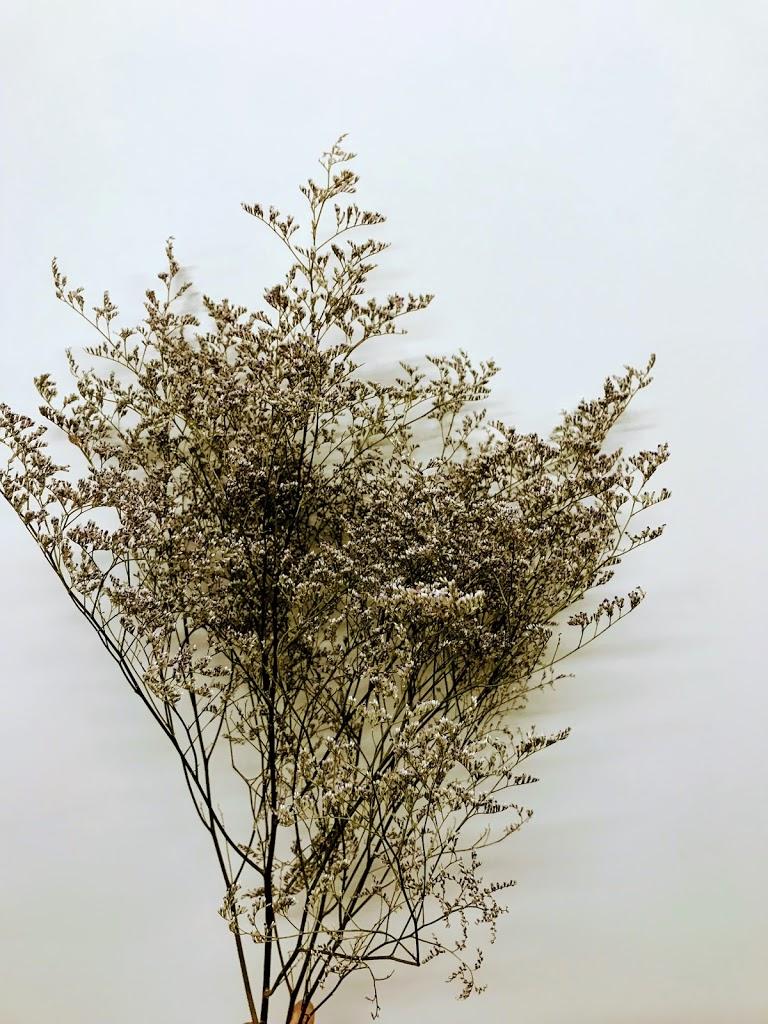 f:id:asunaro-flower:20200614032650j:plain