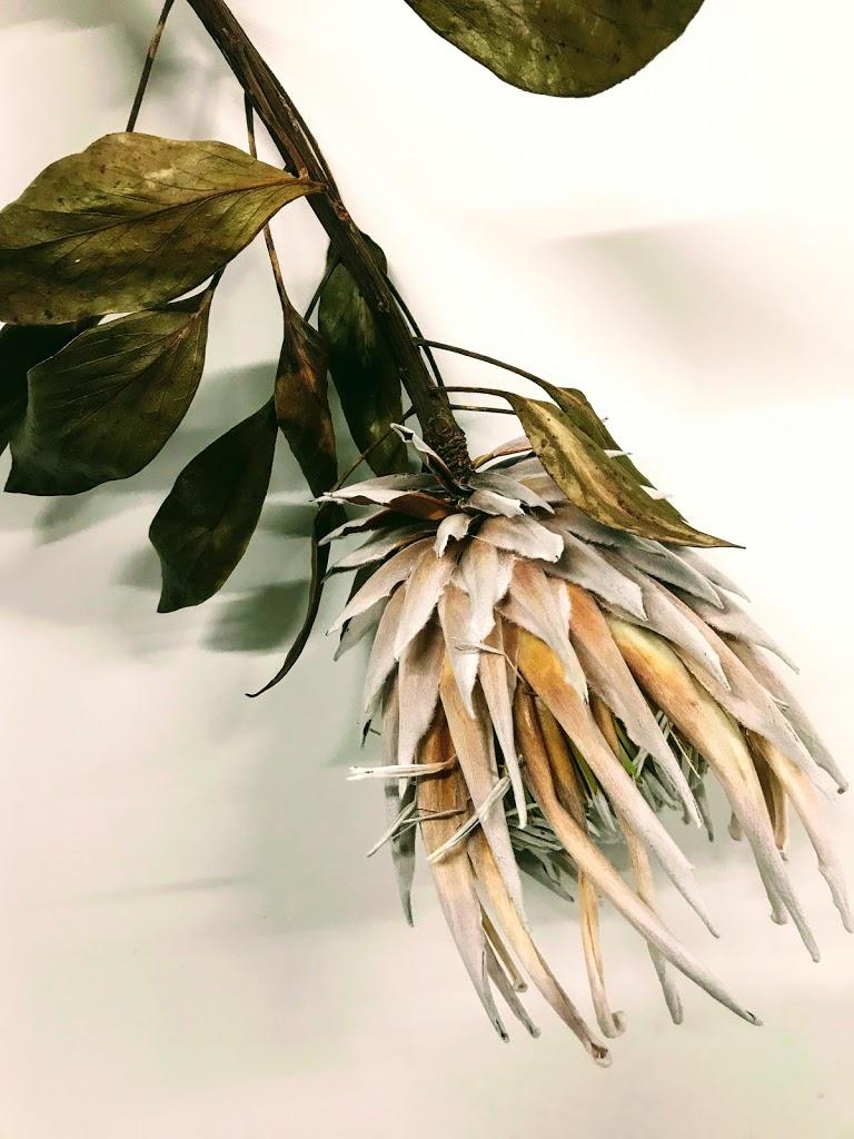 f:id:asunaro-flower:20200614033717j:plain