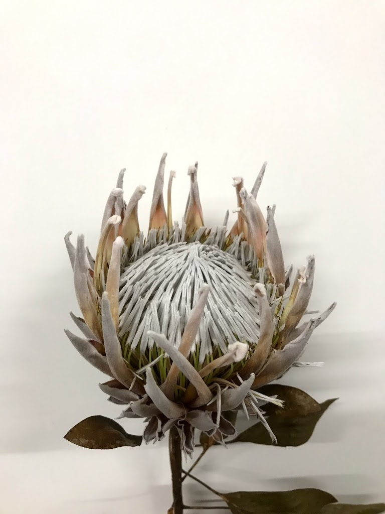 f:id:asunaro-flower:20200614033813j:plain