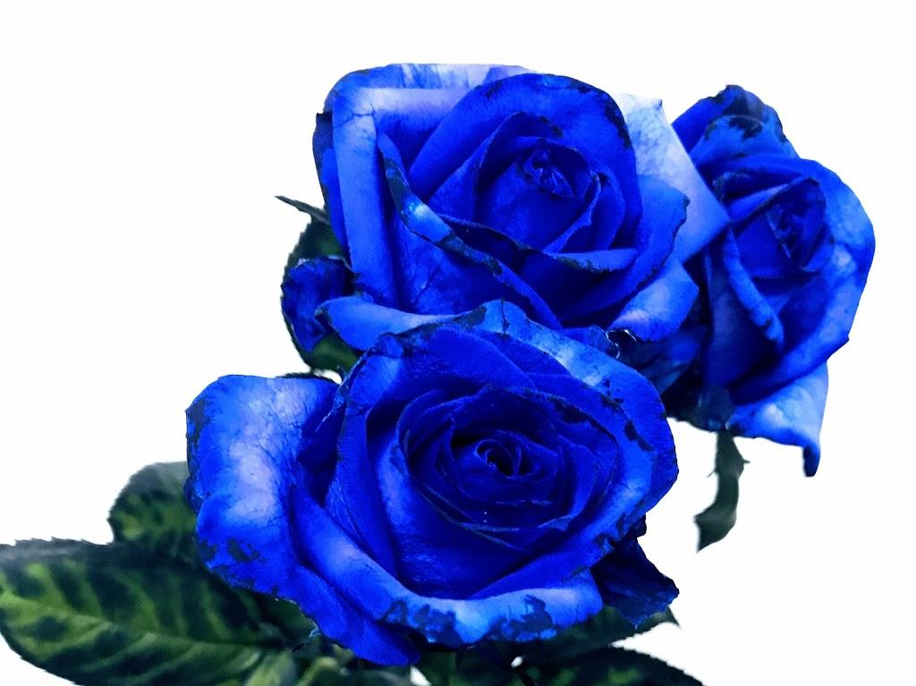 f:id:asunaro-flower:20200614034133j:plain