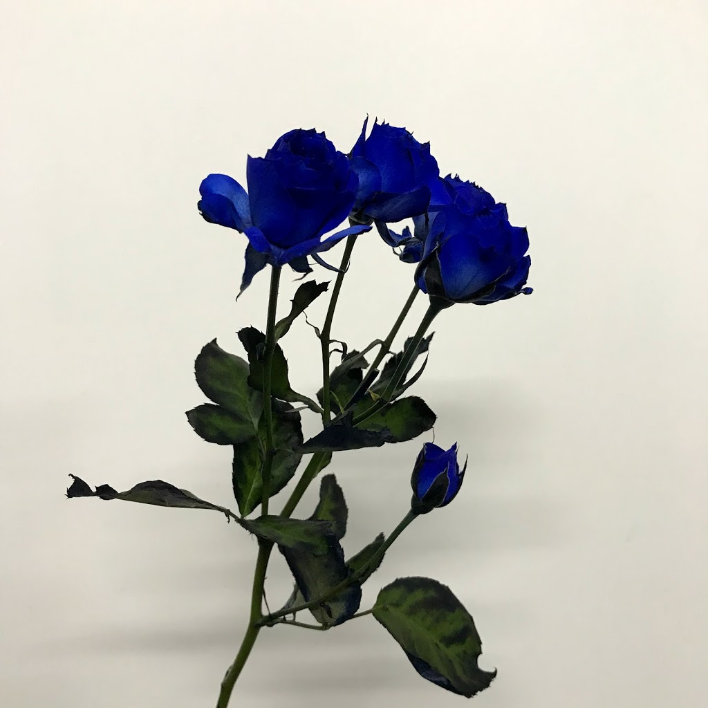 f:id:asunaro-flower:20200614034306j:plain