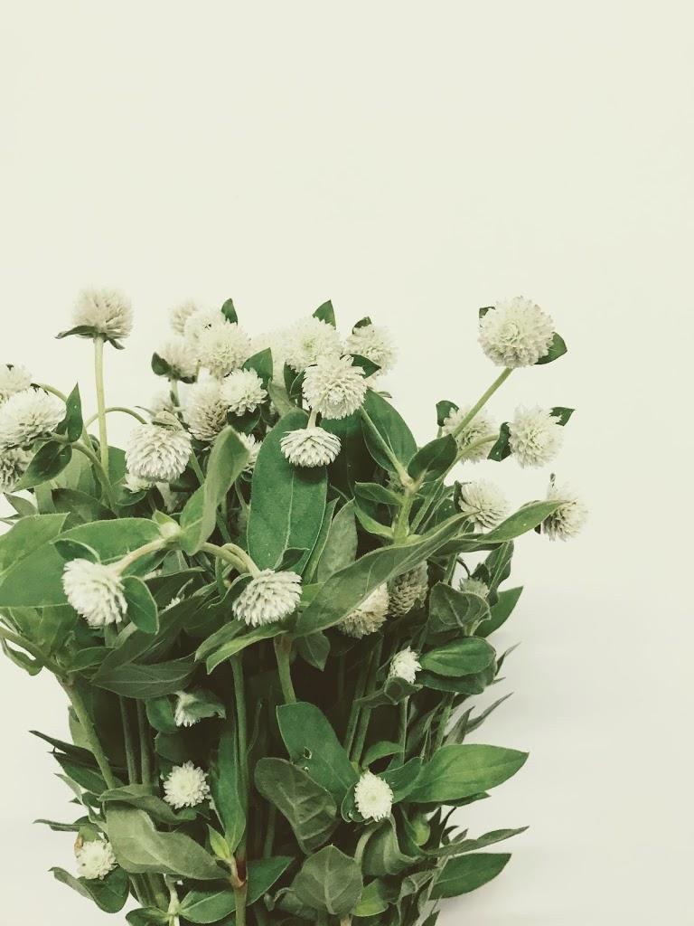f:id:asunaro-flower:20200614034754j:plain
