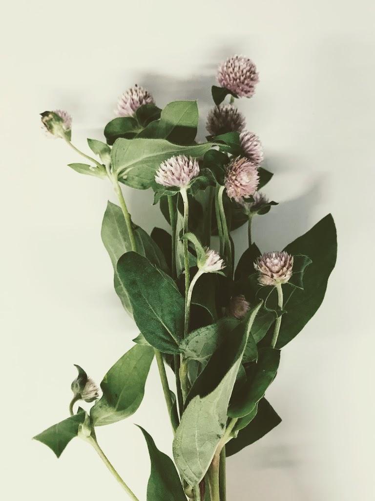 f:id:asunaro-flower:20200614034901j:plain