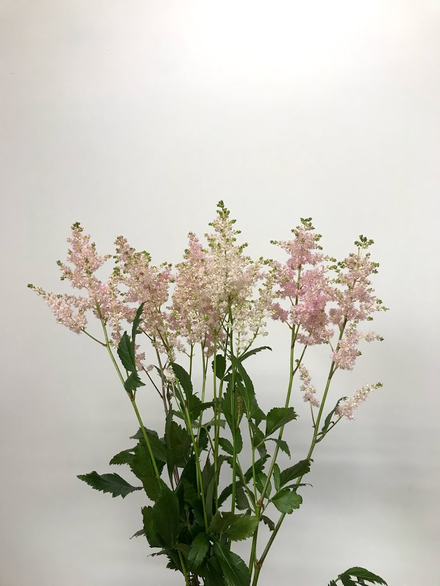 f:id:asunaro-flower:20200614035900j:plain
