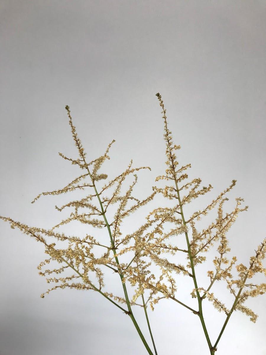 f:id:asunaro-flower:20200614040004j:plain