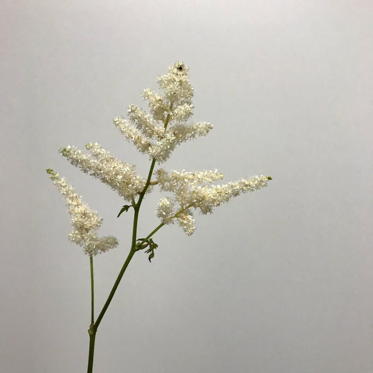 f:id:asunaro-flower:20200614040025j:plain