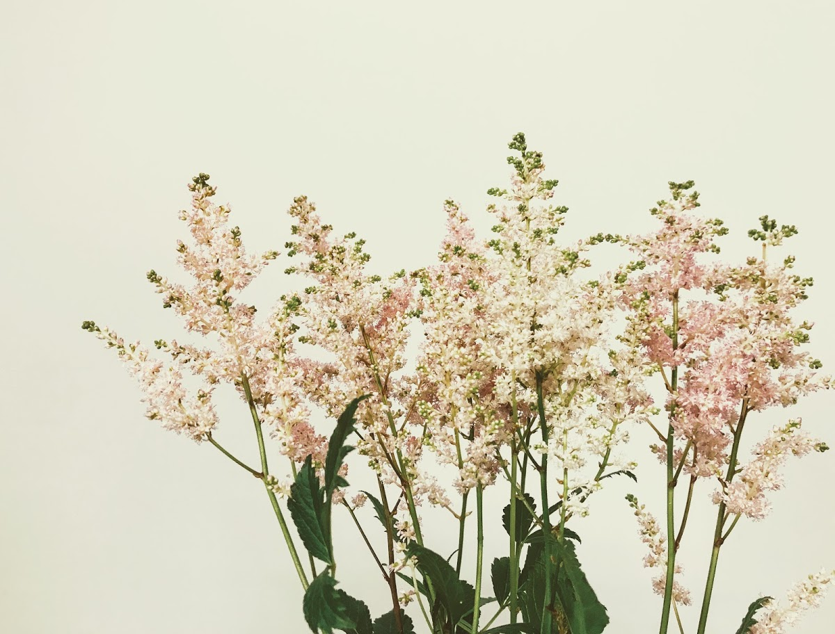 f:id:asunaro-flower:20200614040125j:plain