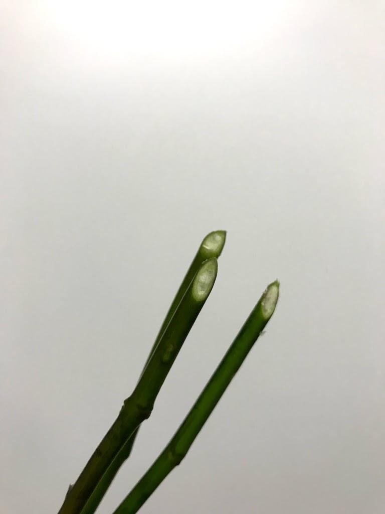 f:id:asunaro-flower:20200614040517j:plain