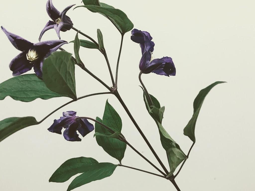 f:id:asunaro-flower:20200615001533j:plain