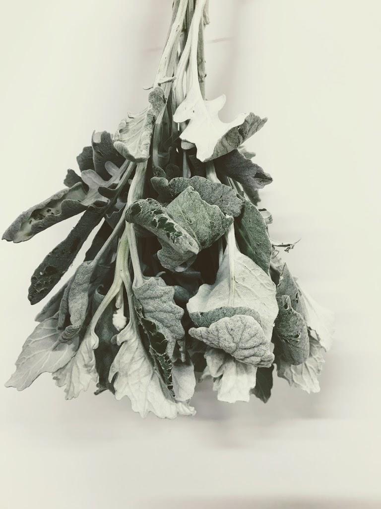 f:id:asunaro-flower:20200615002809j:plain
