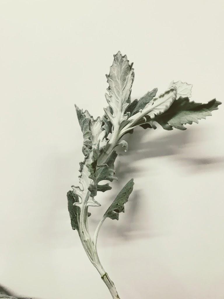 f:id:asunaro-flower:20200615002925j:plain